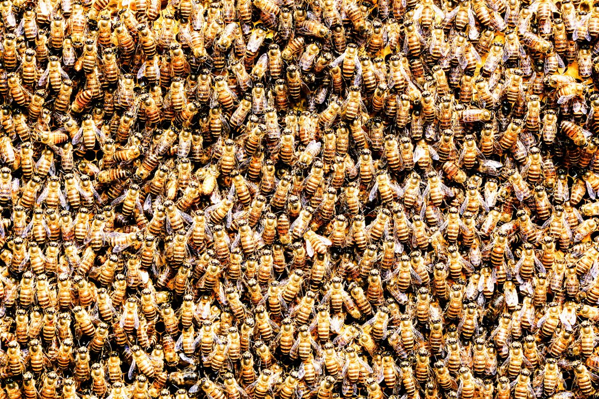 viziunea albinelor moarte